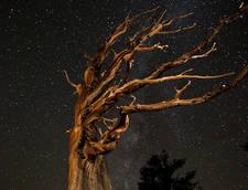 copaci-batrani